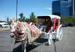 Equishare Baraat Horses & Carriages